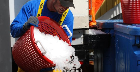 Pouring Ice over fresh fish