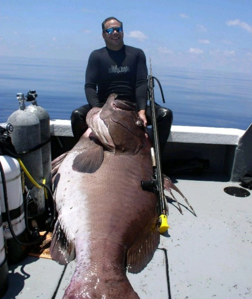 Goliath Grouper after speared in Gulf of Mexico near Florida coast