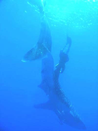 Jason Delacruz Spearfishing